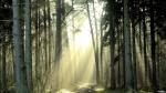 Oboi_s_prekrasnymi_ugolkami_prirody_314_236
