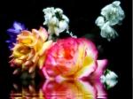 poze desktop cu flori