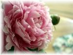 flori frumoase poze tari