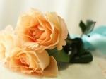 wallpapers cu trandafiri frumosi