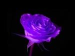 poze cu flori frumoase 3d