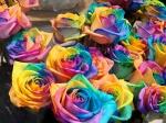 cele mai frumoase flori pentru desktop full hd 3d