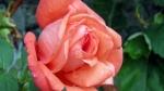 poze cu flori de primavara
