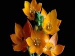 imagini cu flori pentru laptop