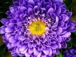 teme cu flori pentru windows 8