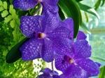 poze cu flori albastre