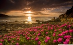 beach_flowers-wallpaper-1920x1200