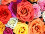 flower-wallpaper-for-windows-xp