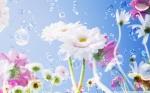 gerbera_daisies_flowers_2-wallpaper-1920x1200