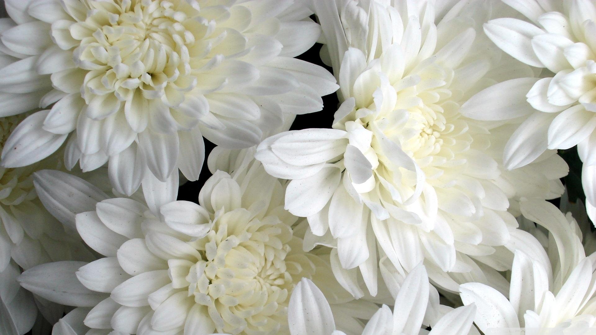 White flowers wallpaper 1920 1080 imagini desktop 3d for 3d white flower wallpaper