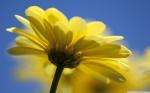 yellow_flower_4-wallpaper-2560x1600